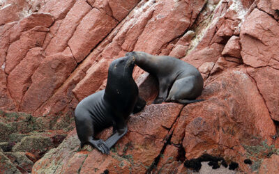 Reservas Naturales del Perú